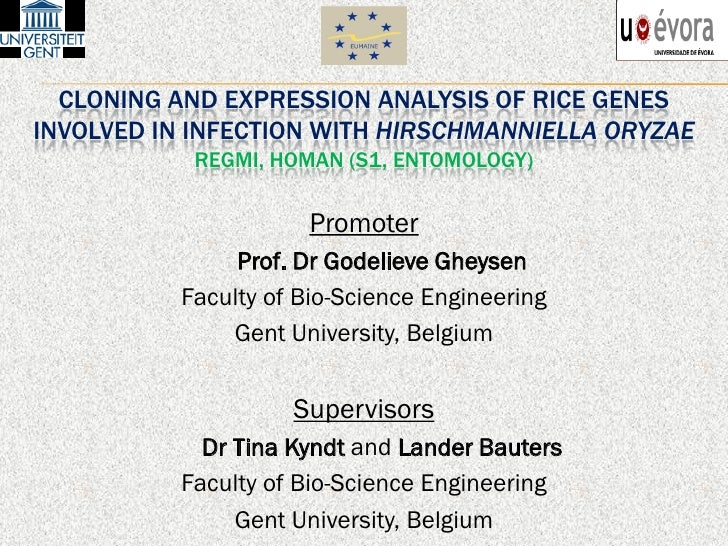CLONING AND EXPRESSION ANALYSIS OF RICE GENESINVOLVED IN INFECTION WITH HIRSCHMANNIELLA ORYZAE           REGMI, HOMAN (S1,...