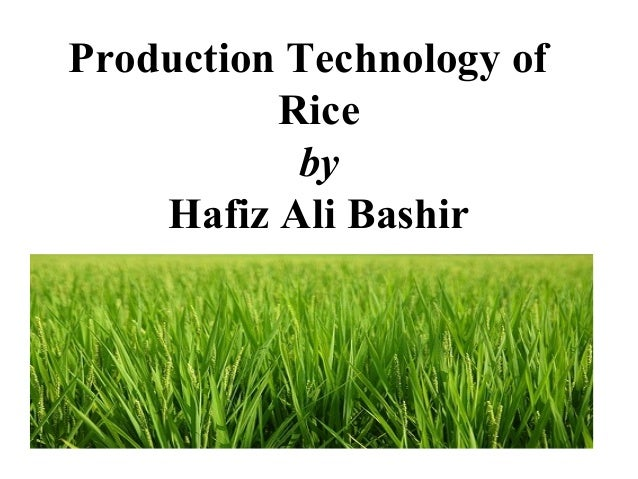 Production Technology of Rice by Hafiz Ali Bashir
