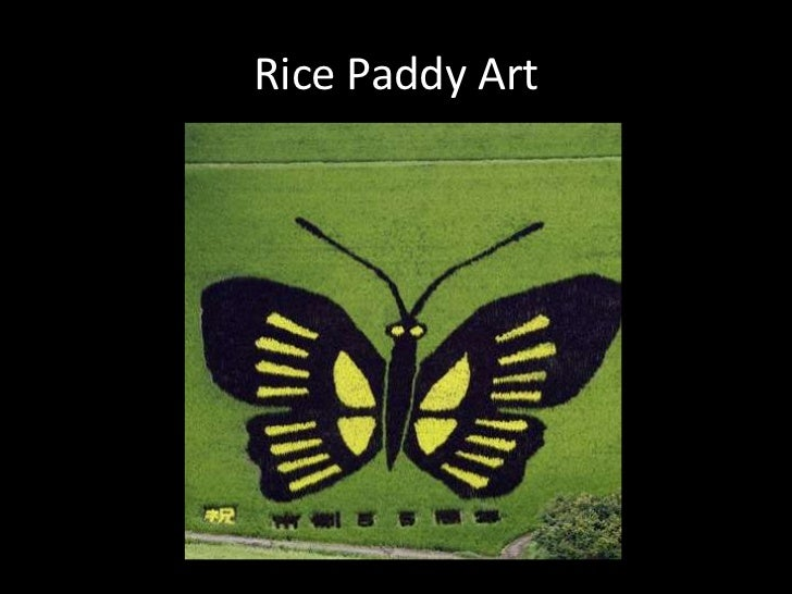 Rice Paddy Art<br />