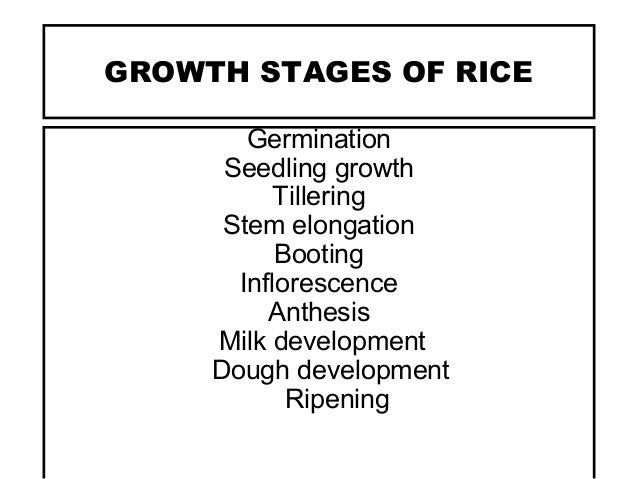 RICE PRODUCTION TECHNOLOGIES