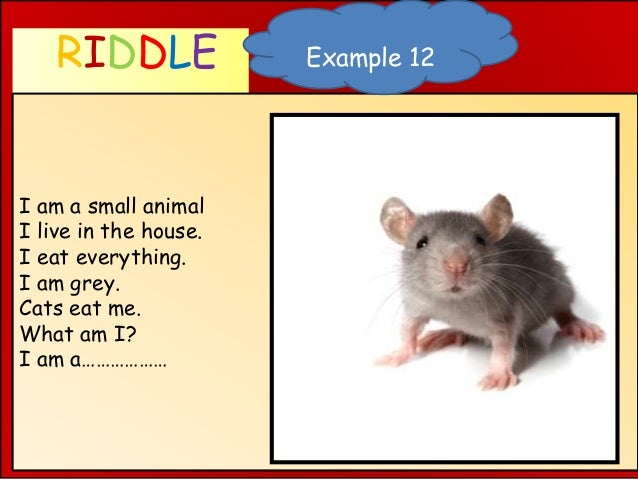 RIDDLE WHAT AM I ? I am a small animal I live in the house. I eat everything. I am grey. Cats eat me. What am I? I am a………...