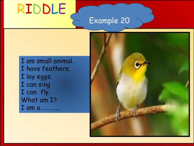RIDDLE WHAT AM I ? Example 20 I am small animal. I have feathers. I lay eggs. I can sing I can fly. What am I? I am a…………..