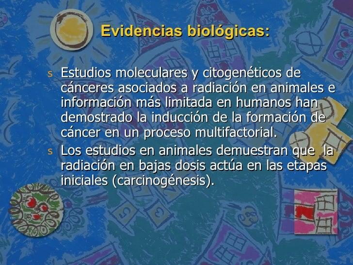 Evidencias biológicas: <ul><li>Estudios moleculares y citogenéticos de cánceres asociados a radiación en animales e inform...