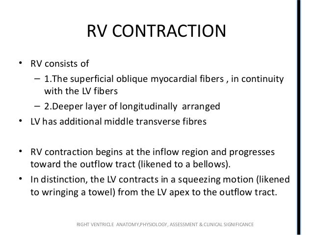 Right ventricle (RV) anatomy and functions
