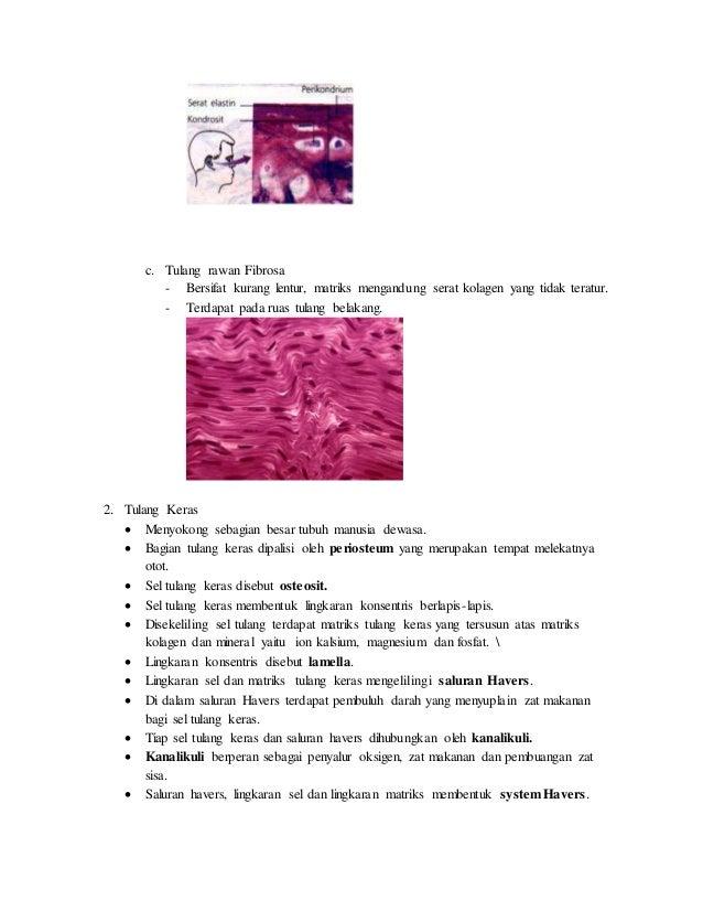 Sistem Rangka Manusia dan Hewan Slide 2