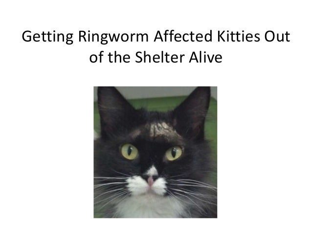 Getting Ringworm Affected Kitties Out of the Shelter Alive