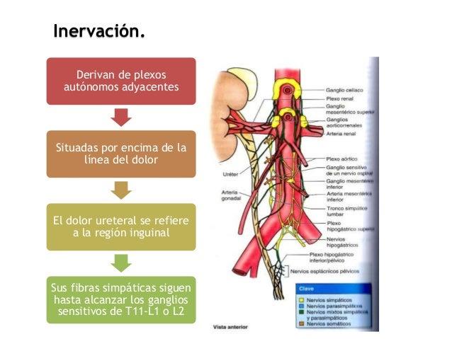 Los ejercicios a la osteocondrosis del departamento sheyno-de pecho