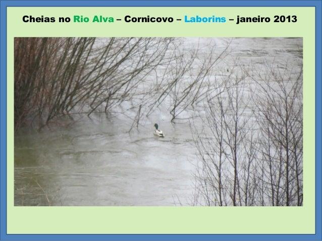 Cheias no Rio Alva – Cornicovo – Laborins – janeiro 2013
