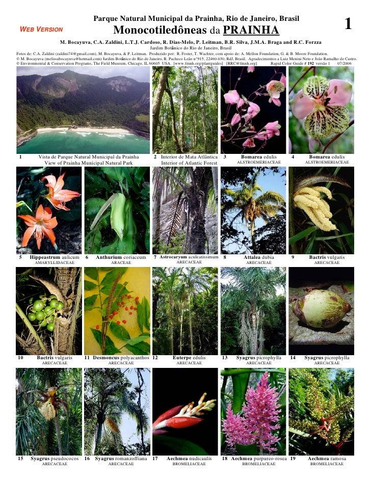 Parque Natural Municipal da Prainha, Rio de Janeiro, Brasil WEB VERSION                                        Monocotiled...