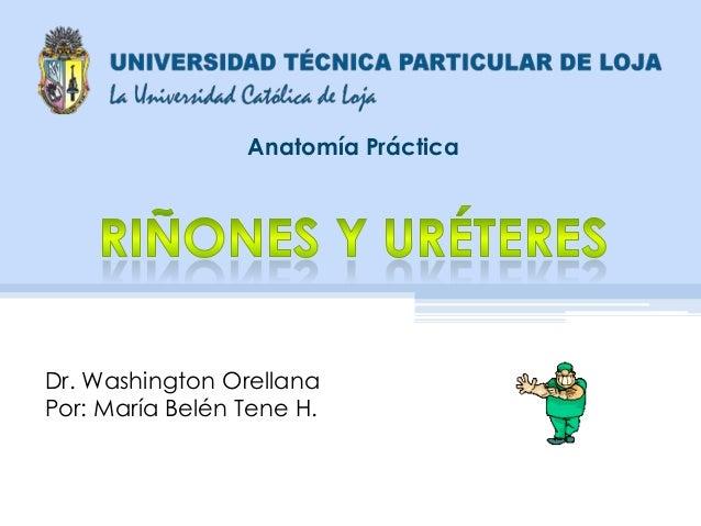 Anatomía Práctica Dr. Washington Orellana Por: María Belén Tene H.