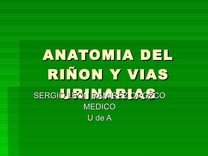 ANATOMIA DEL RIÑON Y VIAS URINARIAS SERGIO LEON RAMIREZ OROZCO MEDICO U de A