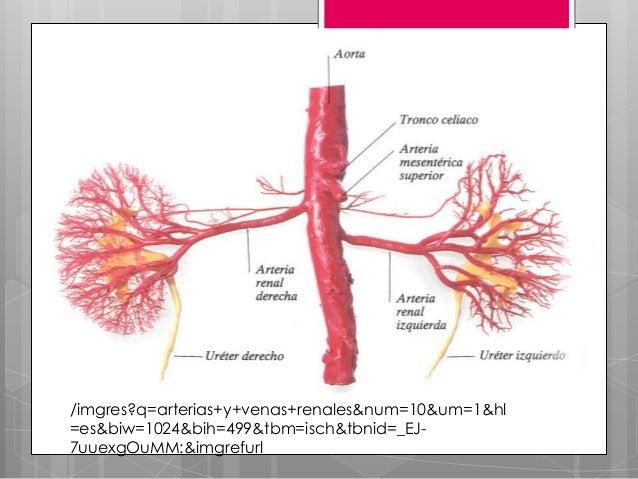Los dolores en el vientre que da en los riñones