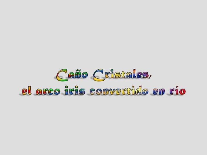S ituado a S erra da Macarena, C olombia, o C año C ris tales , um pequeno rio de apenas 100 Km. de longitude, é conhecido...