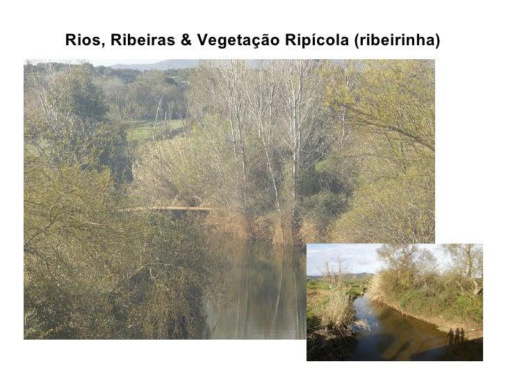 Rios, Ribeiras & Vegetação Ripícola (ribeirinha)
