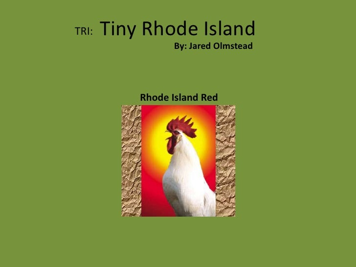 Tiny Rhode Island<br />TRI:<br />By: Jared Olmstead<br />Rhode Island Red<br />