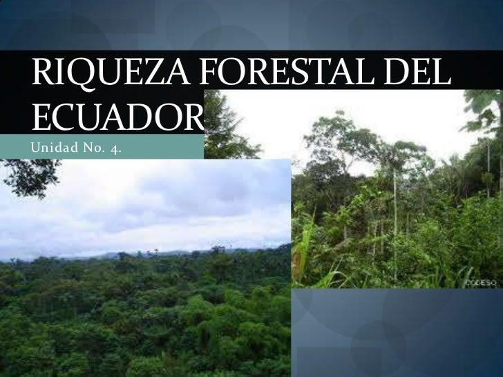 Unidad No. 4. <br />RIQUEZA FORESTAL DEL ECUADOR<br />
