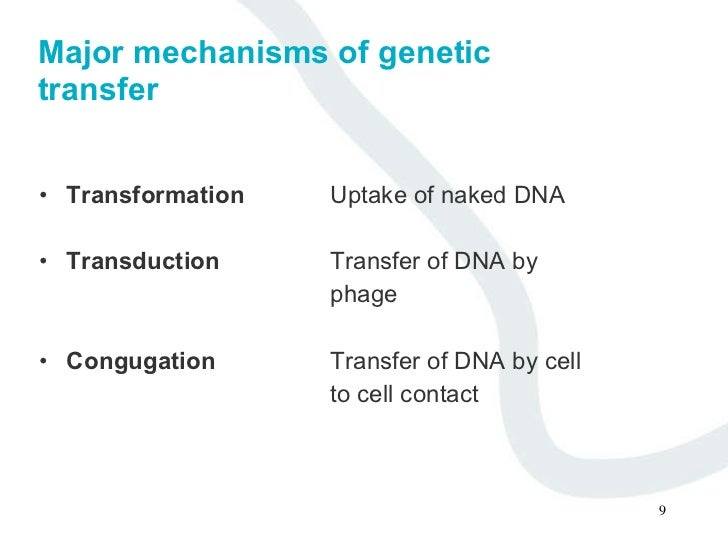 "Difference between ""Plasmid DNA"" and ""Chromosomal DNA""– Explained!"