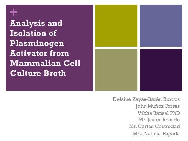 +Analysis andIsolation ofPlasminogenActivator fromMammalian CellCulture BrothDelaine Zayas-Bazán BurgosJohn Muñoz TorresVi...