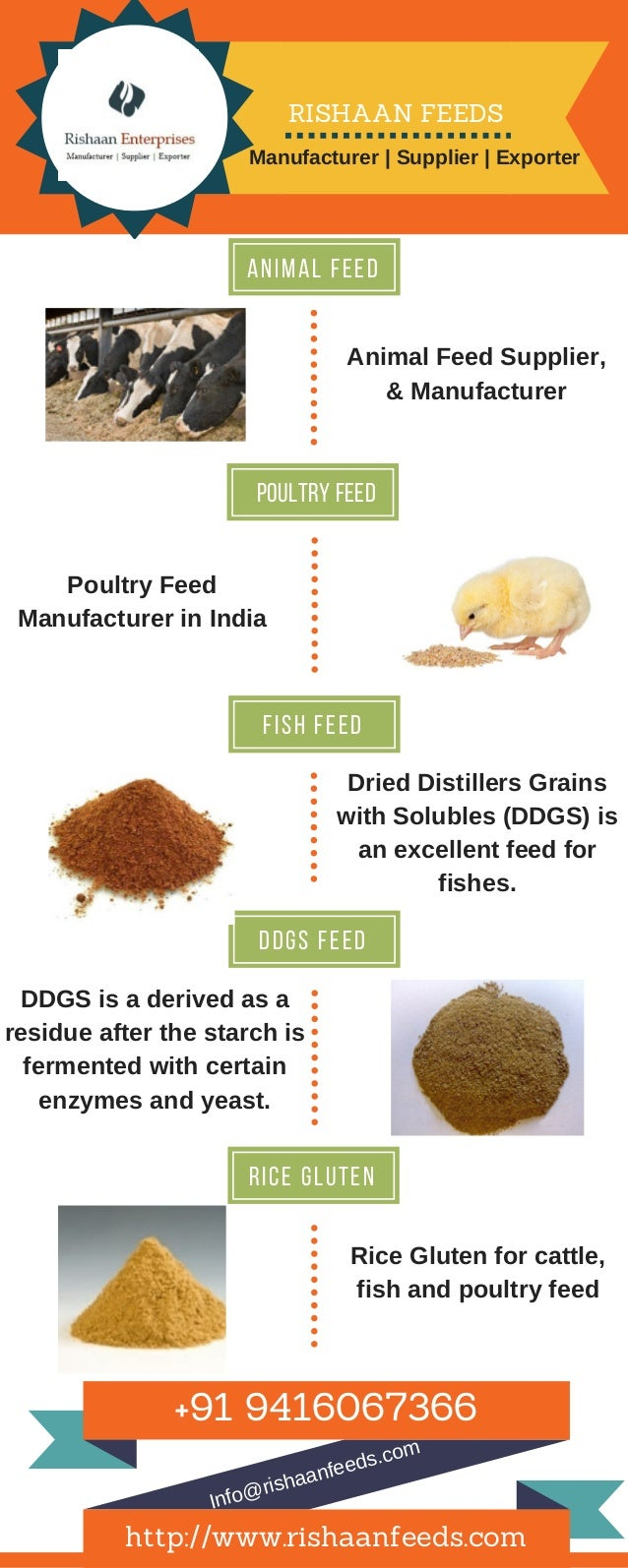 An i m a l F e e d poultry feed F i s h f e e d d d g s f e e d r i c e g l u t e n AnimalFeedSupplier, &Manufacturer P...