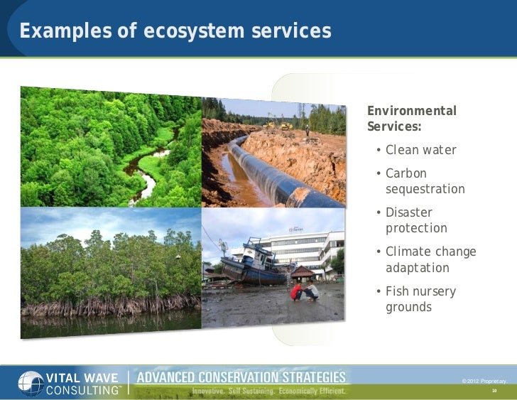 Biodiversity And Ecosystem Services In The Tourism Sector