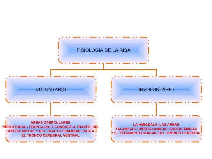 FISIOLOGIA DE LA RISA VOLUNTARIO INVOLUNTARIO LA AMIGDALA, LAS AREAS  TALAMICAS / HIPOTALAMICAS ,SUBTALAMICAS Y EL TEGUMEN...