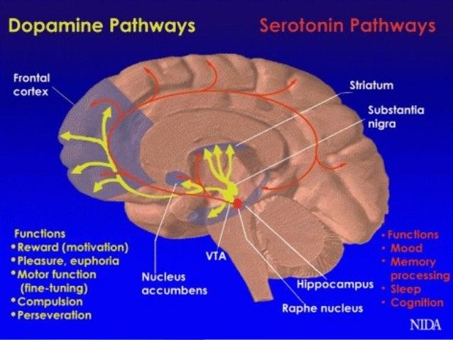 Gambling brain chemicals neurotransmitters grand live casino