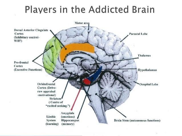 Gambling addiction brain function sun cruises casino