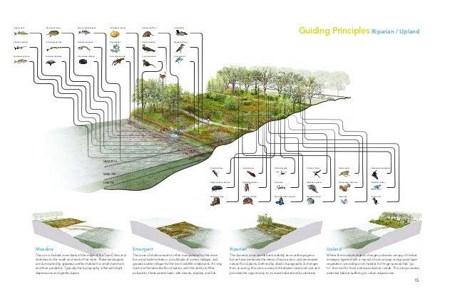 minneapolis riverfront development initiative | 15 Hyla versicolor Sialia sialis Tamiasciurus hudsonicus Contopus cooperi ...