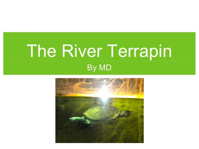 The River Terrapin By MD