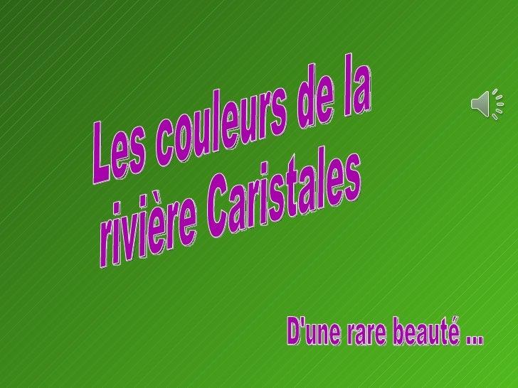 Les couleurs de la rivière Caristales D'une rare beauté …