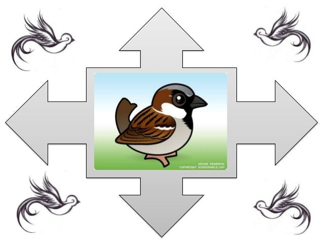 FACTS ABOUT SPARROWS • Sparrows are social birds, nesting closely to one another and flying and feeding in small flocks. •...