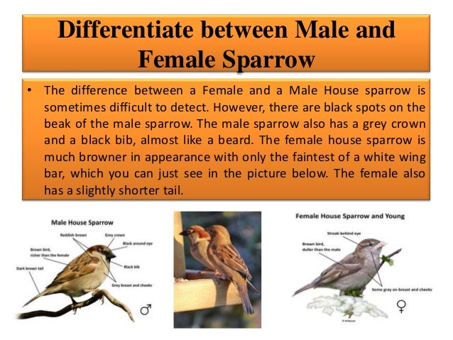 Riya rai v c (my state bird sparrow)