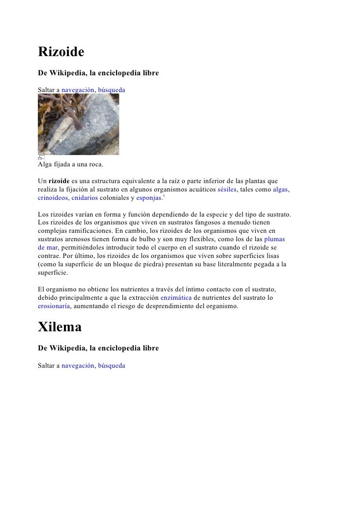 Rizoide De Wikipedia, la enciclopedia libre  Saltar a navegación, búsqueda     Alga fijada a una roca.  Un rizoide es una ...