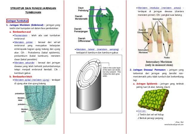 Rangkuman Struktur Dan Fungsi Jaringan Tumbuhan Materi Biologi Sma
