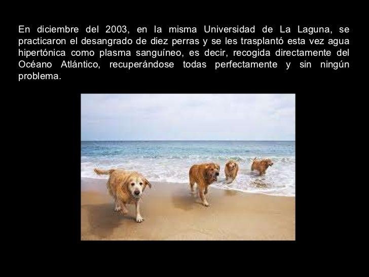 En diciembre del 2003, en la misma Universidad de La Laguna, se practicaron el desangrado de diez perras y se les trasplan...