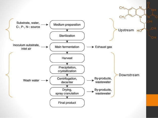 Riboflavinvitamin B2 Fermentation Process