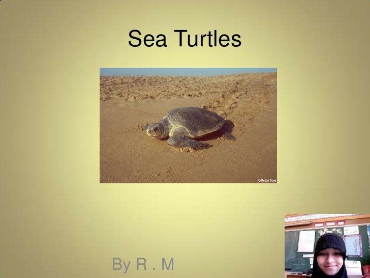 Sea Turtles<br />By R . M<br />