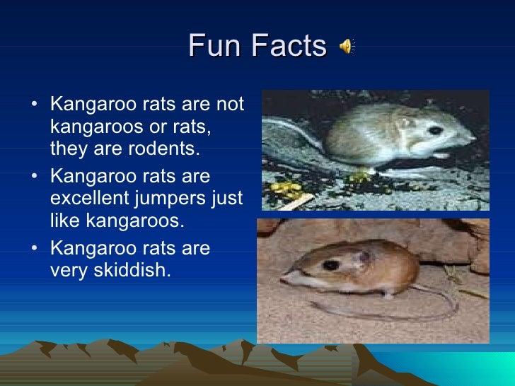 habitat kangaroo rats Dipodomys ordii are the most widespread of all kangaroo rats  habitat d ordii can be found  ord's kangaroo rat (the mammals of texas -online edition) (on.