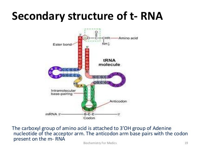 Trna Structure Diagram Residential Electrical Symbols