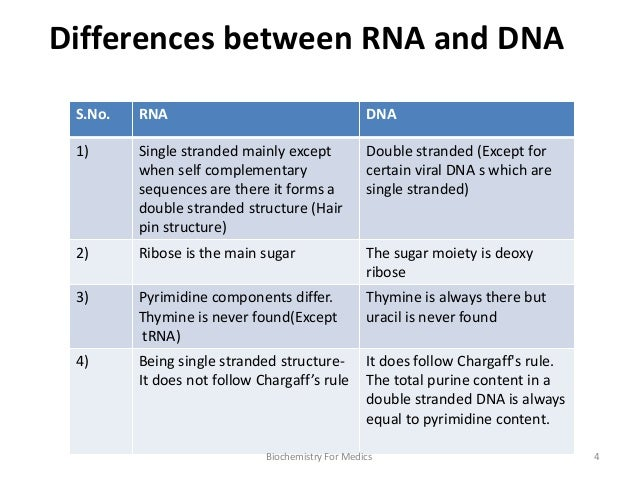 function of dna and rna