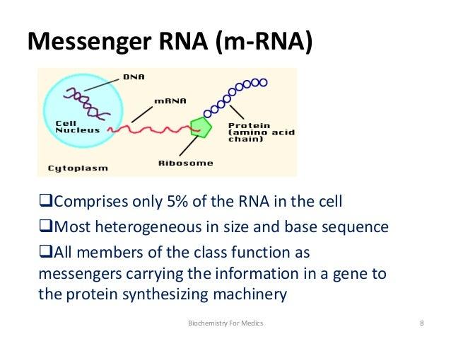 function of mrna
