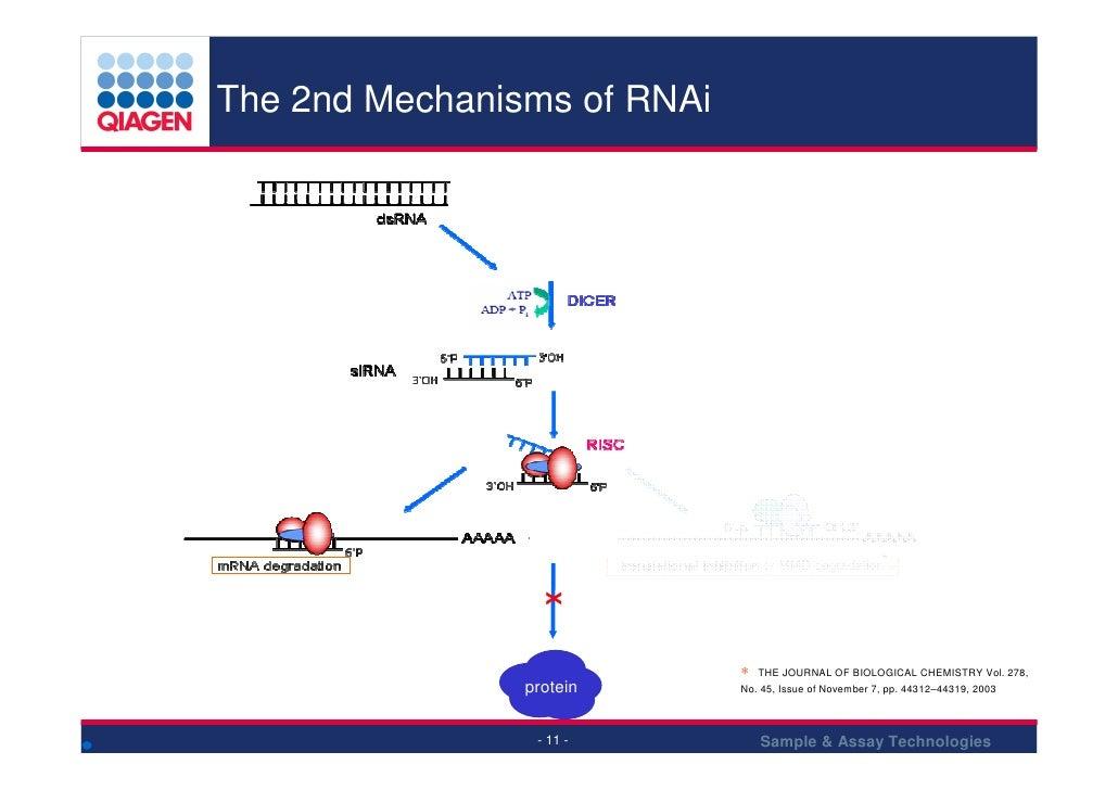 The 2nd Mechanisms of RNAi                                                      pri-miRNA                                 ...