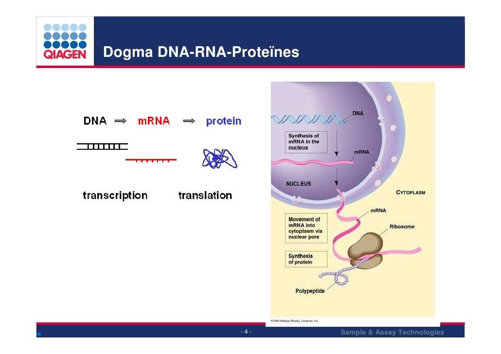 Dogma DNA-RNA-Proteïnes                               Sample & Assay Technologies                 -4-