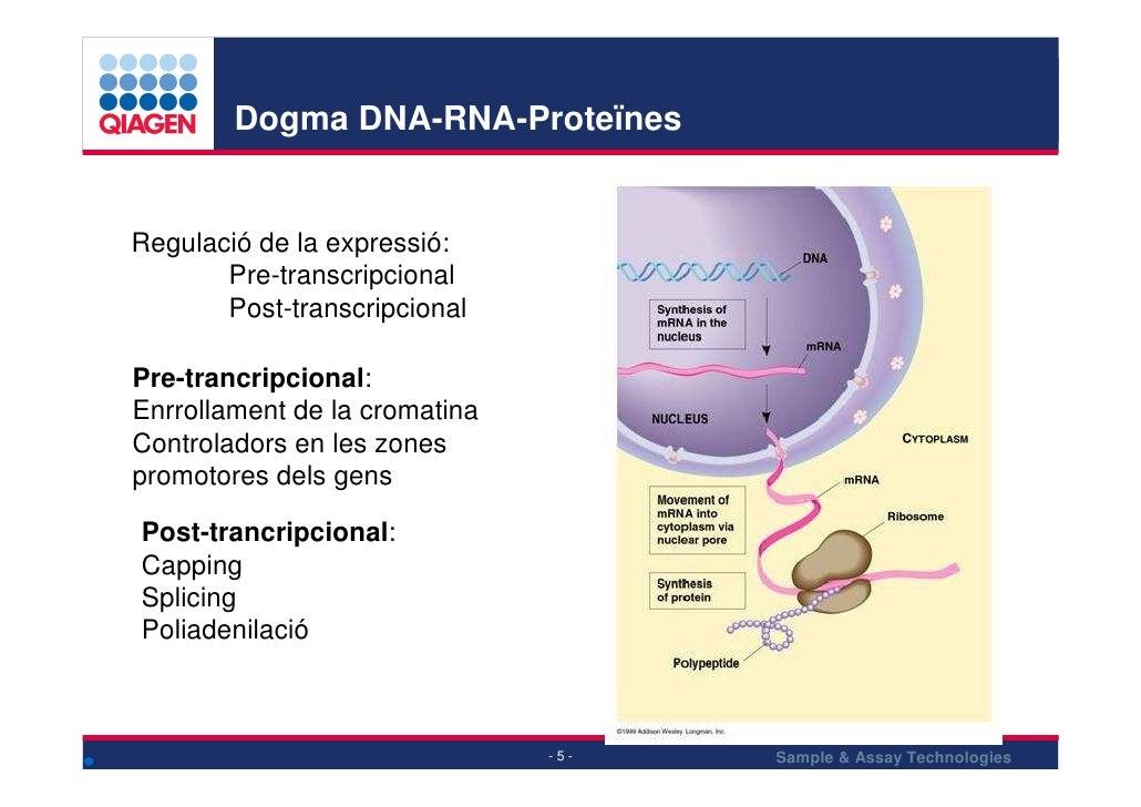 Dogma DNA-RNA-Proteïnes   Regulació de la expressió:        Pre-transcripcional        Post-transcripcional  Pre-trancripc...