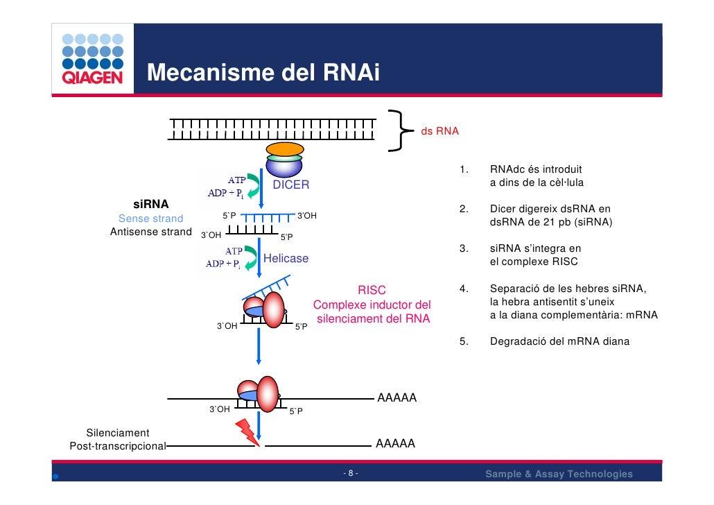Mecanisme del RNAi                                                                            ds RNA                      ...