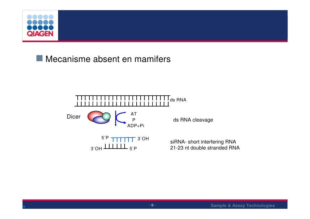 Mecanisme absent en mamifers                                        ds RNA                        AT     Dicer            ...