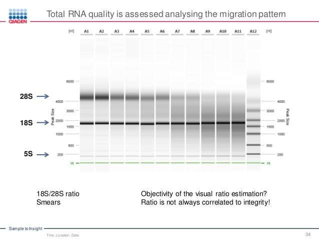 RNA Integrity and Quality – Standardize RNA Quality Control