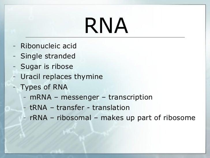 RNA <ul><li>Ribonucleic acid </li></ul><ul><li>Single stranded </li></ul><ul><li>Sugar is ribose </li></ul><ul><li>Uracil ...