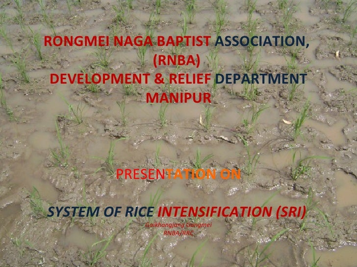 RONGMEI NAGA BAPTIST ASSOCIATION,             (RNBA) DEVELOPMENT & RELIEF DEPARTMENT           MANIPUR         PRESENTATIO...