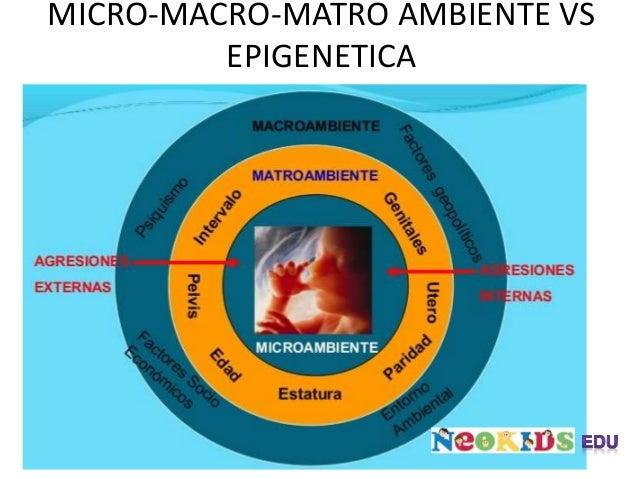 MICRO-MACRO-MATRO AMBIENTE VS EPIGENETICA